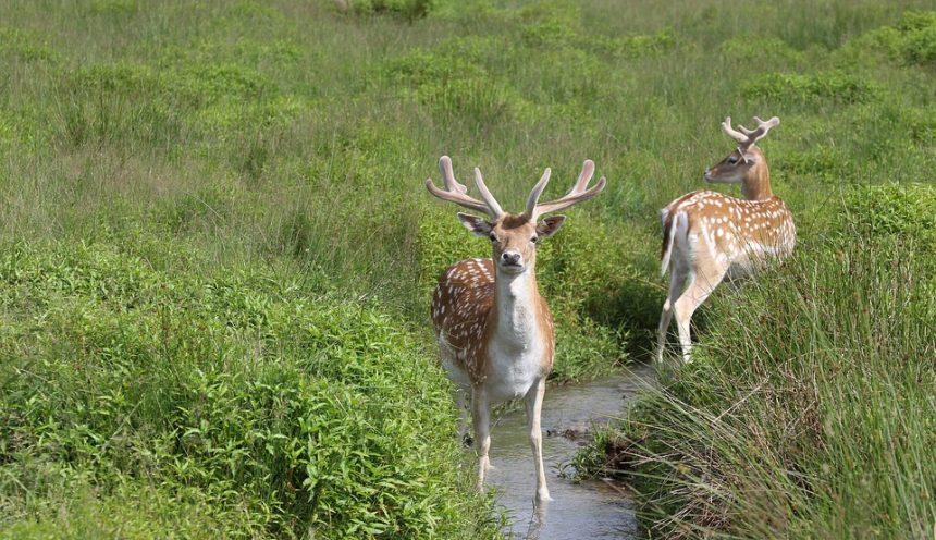 Gita scolastica con escursione al Parco del Circeo alla scoperta della fauna e flora.