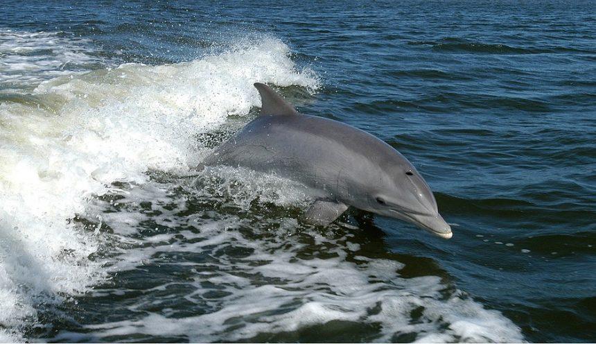 Un'uscita didattica per ammirare i cetacei