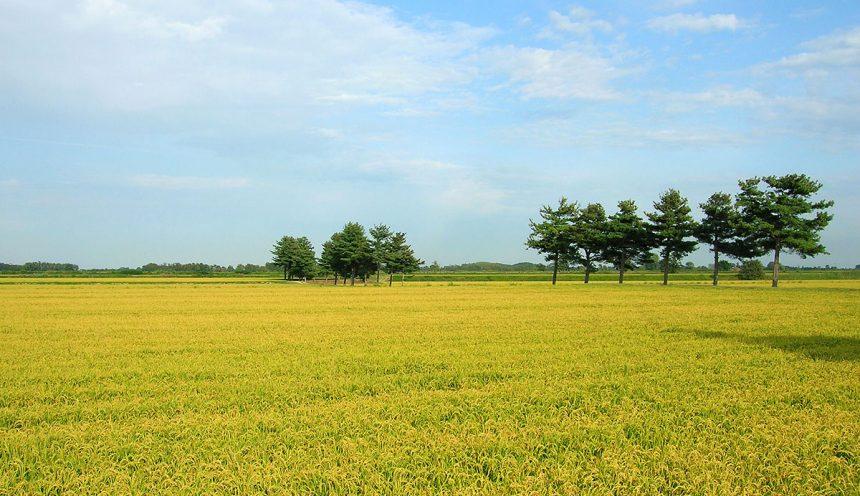 progetto formativo sull'agricoltura sostenibile