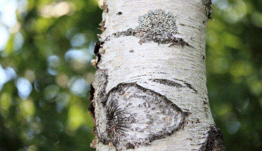 Progetto formativo sulla biodiveristà