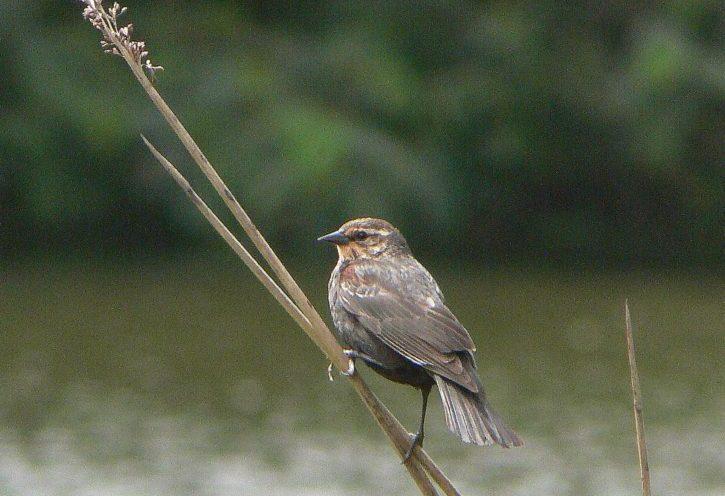 progetto formativo birdwatching