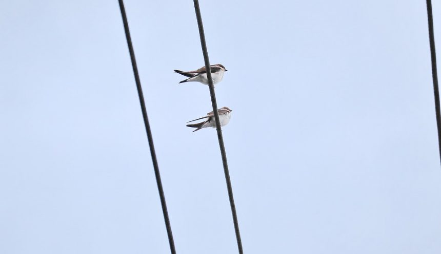 progetto didattico birdwatching