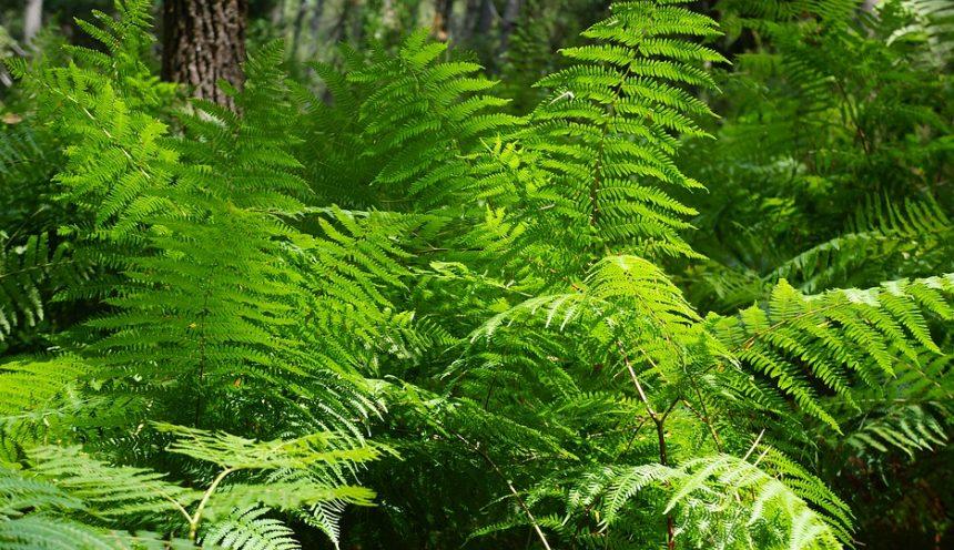 Progetto didattico alla scoperta del mondo vegetale: felci