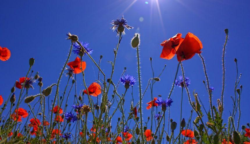 Progetto didattico alla scoperta del mondo vegetale: fiori