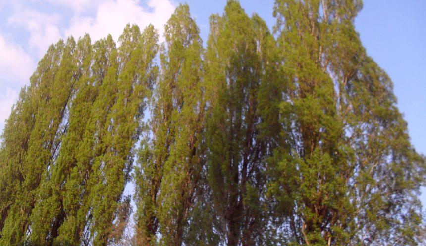 Progetto didattico alla scoperta del mondo vegetale: alberi