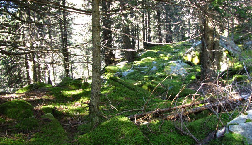 Progetto didattico alla scoperta del mondo vegetale: sottobosco