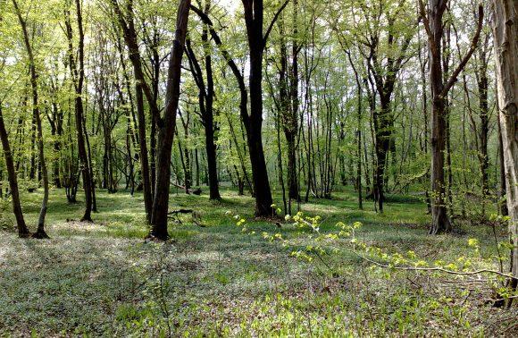Il Bosco delle Querce di Seveso e Meda
