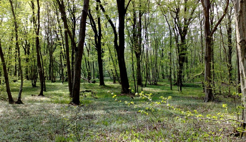 Uscita didattica con escursione al Bosco delle querce