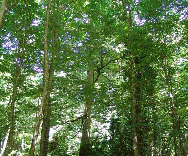 Viaggio di istruzione e uscita didattica alla Foresta Umbra