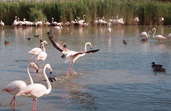 Provenza, Camargue e Parco del Luberon